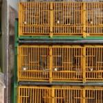 Passing by, April 27 2011,1440hrs-ABC Birds Centre,2011,61x480cm,Fine art print
